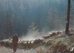 Cpm 10x15 PRESTIGE CEVENNES (2ème Série) N° 079088=P27 Au Petit Matin Départ Pour Un Nouveau Pâturage (Berger & Moutons) - Fotografia