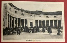 MA20 Cartolina SENIGALLIA (Ancona), FORO ANNONARIO CON MERCATO - FP NV 1928 - Senigallia