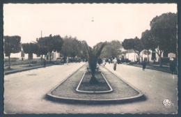 Maroc BERKANE Boulevard De La Moulouya - Maroc