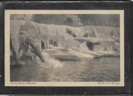 AK 0542 Zoologischer Garten Elberfeld - Seelöwe Im Sprung Um 1926 - Wuppertal