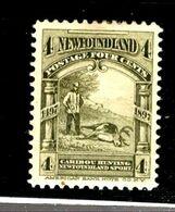 35572 - NEWFOUNDLAND - Amerika (Varia)