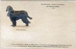 """Collections """"Spratt's Patent"""" Les Races De Chiens - Setter Gordon   (119825) - Chiens"""