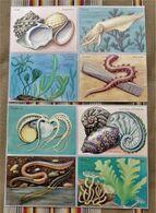 Lot De 8 IMAGES - Old Paper