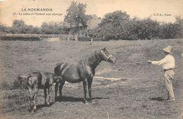 A-20-884 : LA NORMANDIE. EDITION LA C.P.A. LA JUMENT ET SON POULAIN - Chevaux