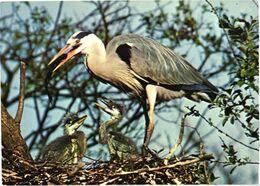 Bird, Ardea Cinerea L., Heron - Oiseaux