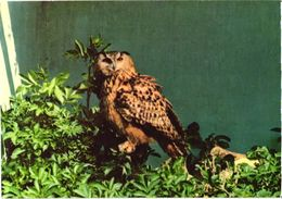 Bird, Eagle Owl - Oiseaux