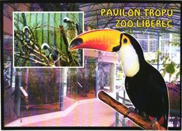 Bird, Tucan, Liberec Zoo - Oiseaux