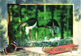Bird, Stork, Ciconia Nigra - Oiseaux