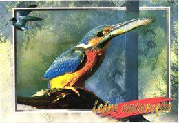 Bird, Kingfisher, Alcedo Atthis - Oiseaux