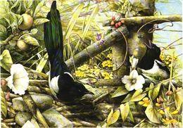 Bird, Marjolen Bastin - Oiseaux
