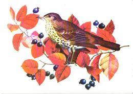 Bird, Berries - Oiseaux