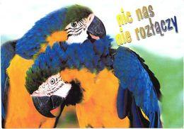 Bird, Parrots - Oiseaux