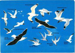 Bird, Different Gulls - Oiseaux