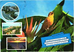 Bird, Canary Bird - Oiseaux