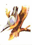 Bird, Tree - Oiseaux