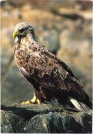 Bird, Eagle - Oiseaux