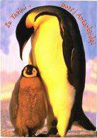 Bird, Penguin - Oiseaux