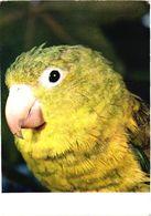 Bird, Parrot On Saint Thomas Island - Oiseaux