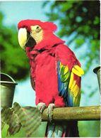 Bird, Parrot, Ara - Oiseaux