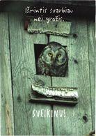 Bird, Owl - Oiseaux