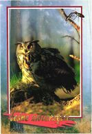 Bird, Owl, Bubo Bubo - Oiseaux