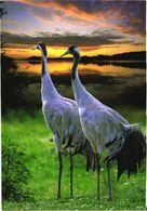 Bird, Storks - Oiseaux