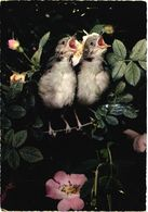 Bird, Blackheaded Warbler - Oiseaux