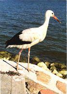 Bird, Stork - Oiseaux