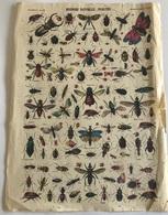 Epinal . Imagerie Pellerin XIXe - Histoire Naturelle, Insectes - N°1271 - Old Paper