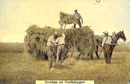 Groeten Uit Zondereygen (top Animation Oogst Paard Gekleurd 1910) - Baarle-Hertog