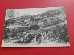 20 - 2B / LOZZI - NIOLO / N° 568 - COLLECTION J . MORETTI, CORTE ( Corse ) / ANIMATION / DOS SCANNE - Autres Communes