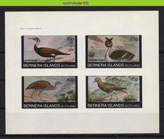 Nfz008 FAUNA VOGELS FUUT AALSCHOLVER * IMPERF * CORMORANT BIRDS VÖGEL AVES OISEAUX SCOTLAND BERNERA ISLANDS 1982 PF/MNH - Fantasy Labels