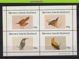 Nfz009 FAUNA VOGELS IJSVOGEL KINGFISHER ORIOLE BIRDS VÖGEL AVES OISEAUX SCOTLAND BERNERA ISLANDS 1981 PF/MNH - Fantasy Labels