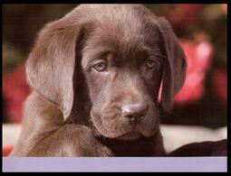 (I 15) Dog - Chien - Hunde