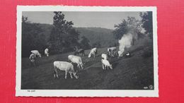 VEKOSLAV KRAMARIC.Na Pasi-pastirji - Slovenië