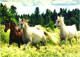 Running Horses - Chevaux