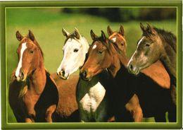 Standing Horses - Chevaux