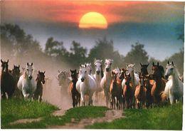 Running Horses, Sunset - Chevaux