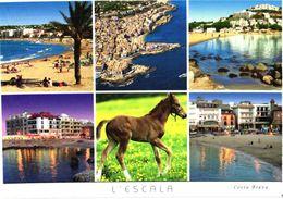 Spain:Foal, L'Escala Views - Chevaux