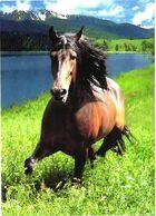 Walking Horse - Cavalli
