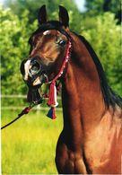 Posing Horse - Chevaux