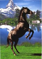 Jumping Horse - Cavalli