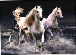 White Horses Running In Water - Chevaux
