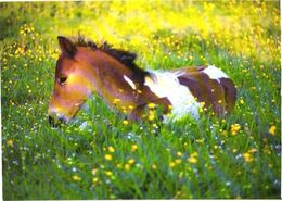 Horse In Grass - Chevaux