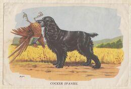 PUB PUBLICITE PRODUIT PHARMACEUTIQUE Illustrateur Signé BIOLACTYL Cocker Spaniel - Publicidad