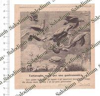 1924 - Tartaruga - Turtle - Da Pubblicazione Originale D'epoca - Cromos Troquelados