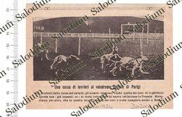 1924 - Cane Dog Levriero Paris - Da Pubblicazione Originale D'epoca - Cromos Troquelados