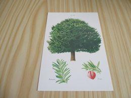 L'if. - Bäume