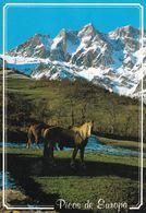 Chevaux Au Picos D'Europa - Chevaux