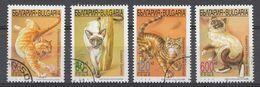 BULGARIEN 1998  MI.NR.4437-4340 Katzen  USED / GEBRUIKT / OBLITE98 - Usati